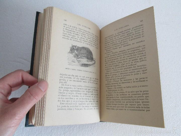 Libros antiguos: J.H. FABRE. LOS AUXILIARES. CONVERSACIONES SOBRE LOS ANIMALES UTILES A LA AGRICULTURA. 1920. - Foto 14 - 55684052