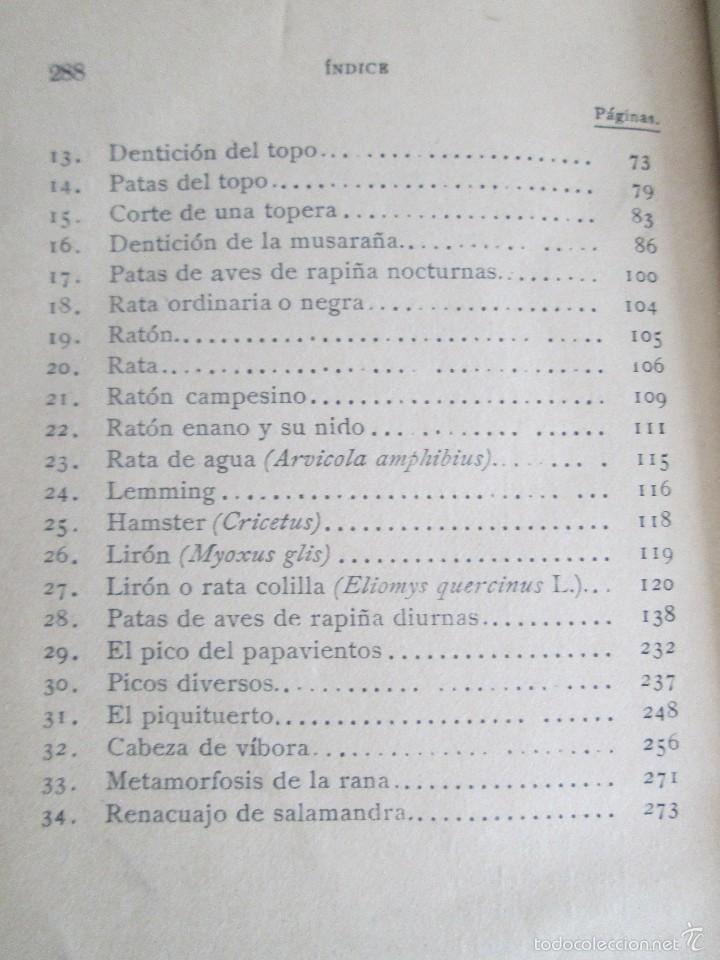 Libros antiguos: J.H. FABRE. LOS AUXILIARES. CONVERSACIONES SOBRE LOS ANIMALES UTILES A LA AGRICULTURA. 1920. - Foto 19 - 55684052