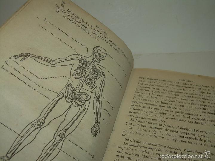 Libros antiguos: LIBRO TAPAS PIEL...HISTORIA NATURAL....ZOOLOGIA,BOTANICA,MINERALOGIA,ZOOGRAFIA.ETC..AÑO 1.870 - Foto 5 - 56514916