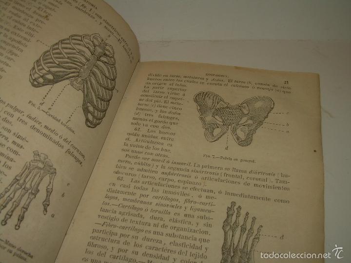 Libros antiguos: LIBRO TAPAS PIEL...HISTORIA NATURAL....ZOOLOGIA,BOTANICA,MINERALOGIA,ZOOGRAFIA.ETC..AÑO 1.870 - Foto 6 - 56514916