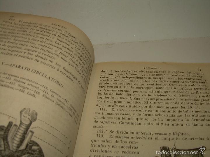 Libros antiguos: LIBRO TAPAS PIEL...HISTORIA NATURAL....ZOOLOGIA,BOTANICA,MINERALOGIA,ZOOGRAFIA.ETC..AÑO 1.870 - Foto 7 - 56514916