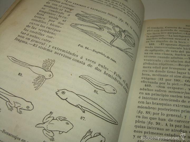 Libros antiguos: LIBRO TAPAS PIEL...HISTORIA NATURAL....ZOOLOGIA,BOTANICA,MINERALOGIA,ZOOGRAFIA.ETC..AÑO 1.870 - Foto 11 - 56514916