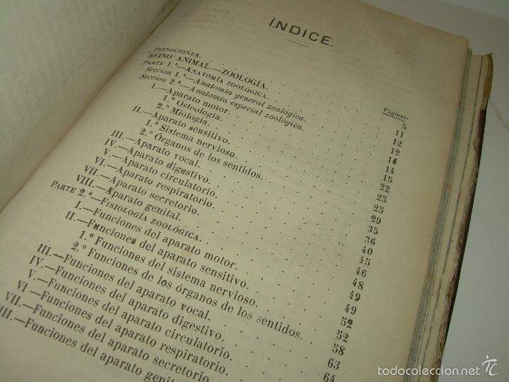 Libros antiguos: LIBRO TAPAS PIEL...HISTORIA NATURAL....ZOOLOGIA,BOTANICA,MINERALOGIA,ZOOGRAFIA.ETC..AÑO 1.870 - Foto 23 - 56514916