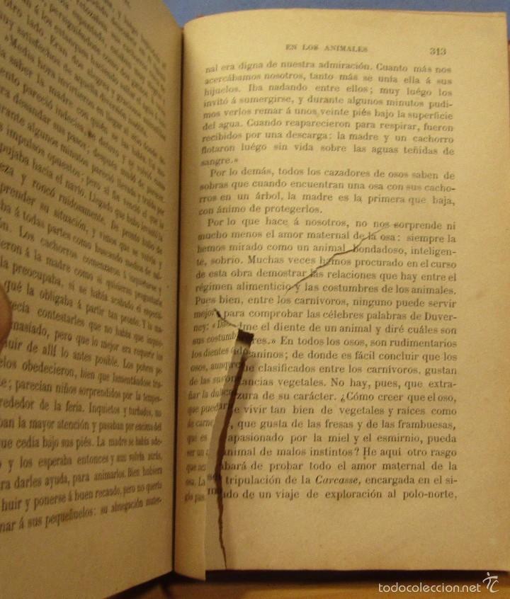 Libros antiguos: AMOR MATERNAL EN LOS ANIMALES BIBLIOTECA MARAVILLAS CECILIO NAVARRO ILUST. A.MENSEL AÑO 1885 - Foto 4 - 56573432