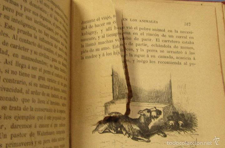 Libros antiguos: AMOR MATERNAL EN LOS ANIMALES BIBLIOTECA MARAVILLAS CECILIO NAVARRO ILUST. A.MENSEL AÑO 1885 - Foto 5 - 56573432