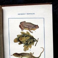 Libros antiguos: HISTORIA NATURAL TOMOS XI - X - REPTILES - PECES- ZIMMERMANN. Lote 57130315