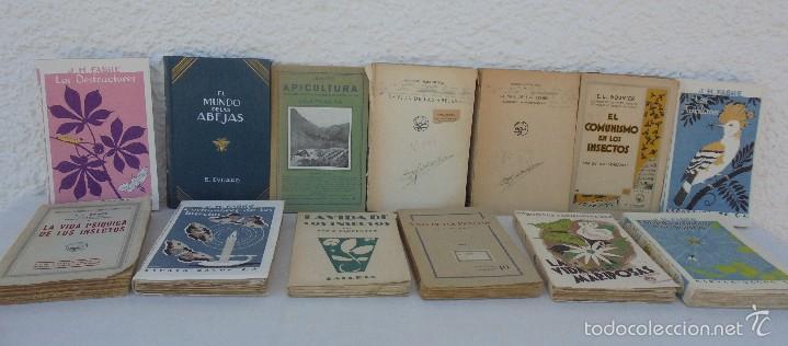 COLECCION DE LIBROS SOBRE INSECTOS. TODOS FOTOGRAFIADOS. 3 LIBROS SOBRE ABEJAS. 13 LIBROS EN TOTAL. (Libros Antiguos, Raros y Curiosos - Ciencias, Manuales y Oficios - Bilogía y Botánica)