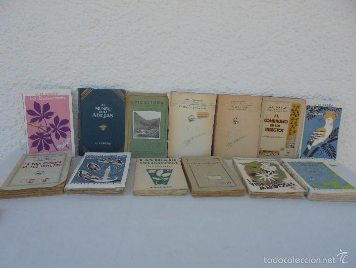 Libros antiguos: COLECCION DE LIBROS SOBRE INSECTOS. TODOS FOTOGRAFIADOS. 3 LIBROS SOBRE ABEJAS. 13 LIBROS EN TOTAL. - Foto 2 - 57691855