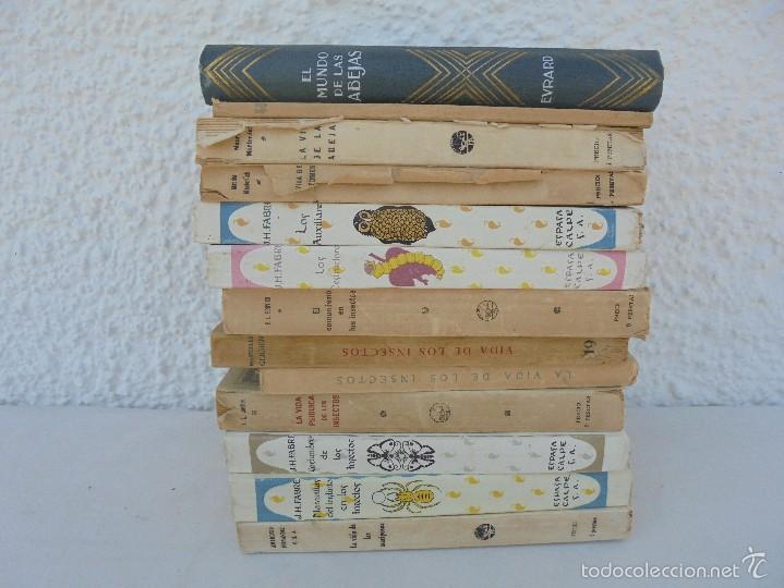 Libros antiguos: COLECCION DE LIBROS SOBRE INSECTOS. TODOS FOTOGRAFIADOS. 3 LIBROS SOBRE ABEJAS. 13 LIBROS EN TOTAL. - Foto 3 - 57691855