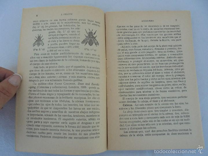 Libros antiguos: COLECCION DE LIBROS SOBRE INSECTOS. TODOS FOTOGRAFIADOS. 3 LIBROS SOBRE ABEJAS. 13 LIBROS EN TOTAL. - Foto 19 - 57691855