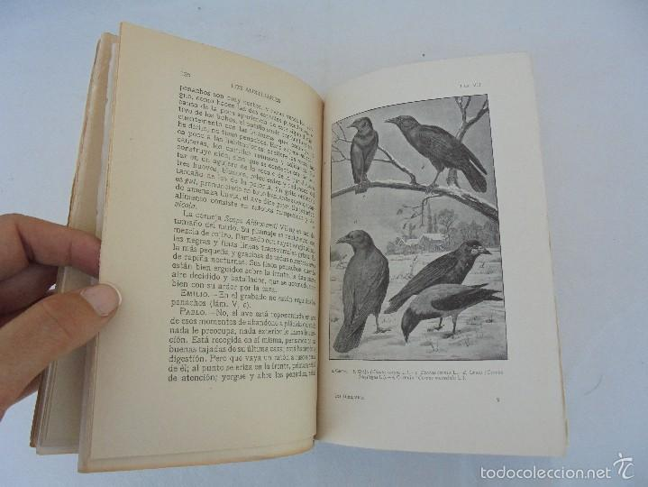 Libros antiguos: COLECCION DE LIBROS SOBRE INSECTOS. TODOS FOTOGRAFIADOS. 3 LIBROS SOBRE ABEJAS. 13 LIBROS EN TOTAL. - Foto 42 - 57691855