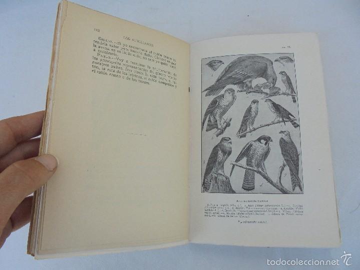 Libros antiguos: COLECCION DE LIBROS SOBRE INSECTOS. TODOS FOTOGRAFIADOS. 3 LIBROS SOBRE ABEJAS. 13 LIBROS EN TOTAL. - Foto 43 - 57691855