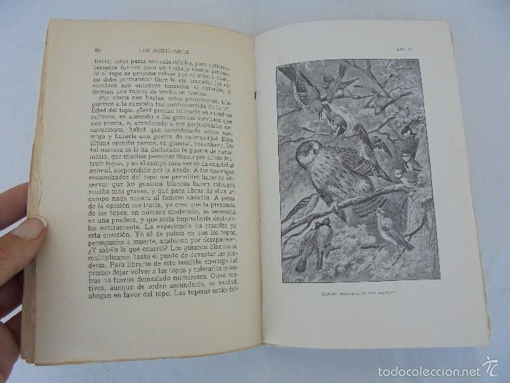 Libros antiguos: COLECCION DE LIBROS SOBRE INSECTOS. TODOS FOTOGRAFIADOS. 3 LIBROS SOBRE ABEJAS. 13 LIBROS EN TOTAL. - Foto 44 - 57691855