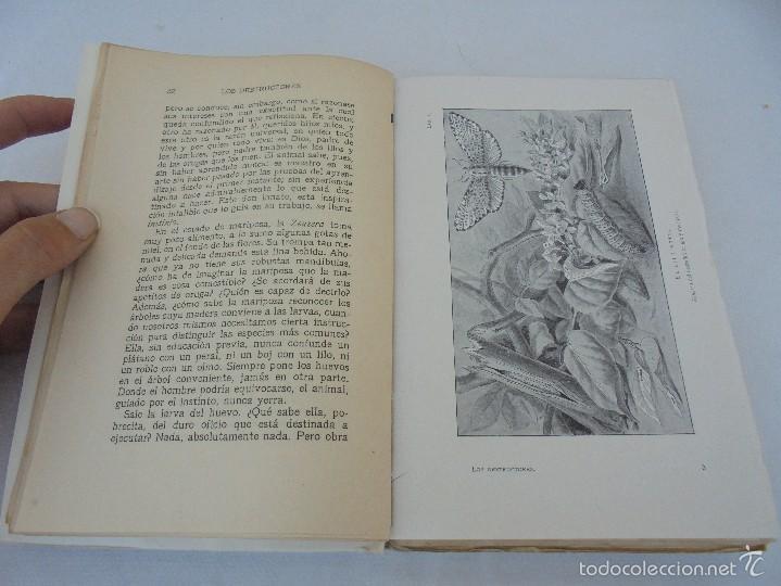 Libros antiguos: COLECCION DE LIBROS SOBRE INSECTOS. TODOS FOTOGRAFIADOS. 3 LIBROS SOBRE ABEJAS. 13 LIBROS EN TOTAL. - Foto 53 - 57691855