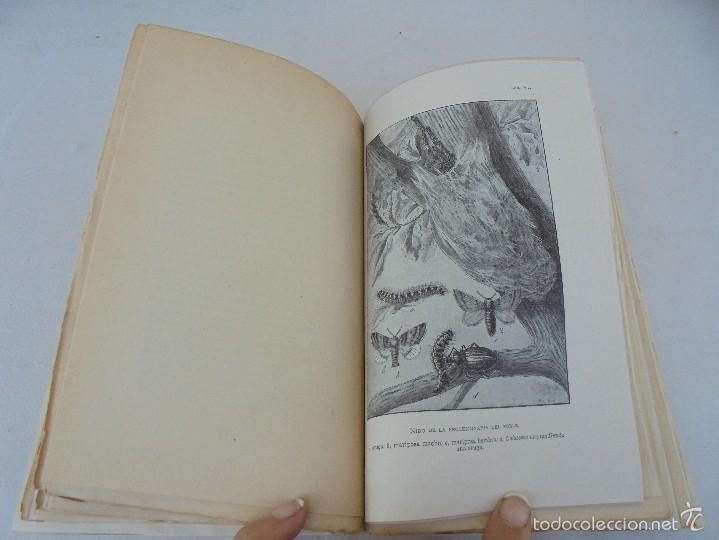 Libros antiguos: COLECCION DE LIBROS SOBRE INSECTOS. TODOS FOTOGRAFIADOS. 3 LIBROS SOBRE ABEJAS. 13 LIBROS EN TOTAL. - Foto 54 - 57691855