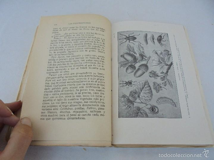Libros antiguos: COLECCION DE LIBROS SOBRE INSECTOS. TODOS FOTOGRAFIADOS. 3 LIBROS SOBRE ABEJAS. 13 LIBROS EN TOTAL. - Foto 55 - 57691855