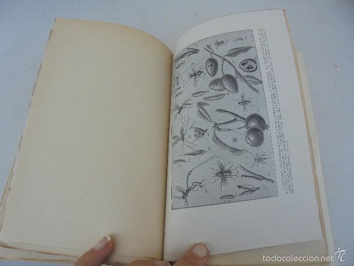 Libros antiguos: COLECCION DE LIBROS SOBRE INSECTOS. TODOS FOTOGRAFIADOS. 3 LIBROS SOBRE ABEJAS. 13 LIBROS EN TOTAL. - Foto 56 - 57691855