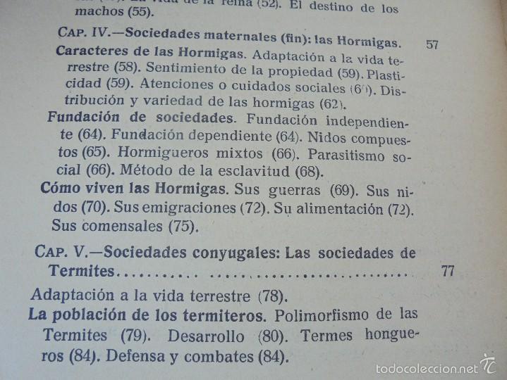Libros antiguos: COLECCION DE LIBROS SOBRE INSECTOS. TODOS FOTOGRAFIADOS. 3 LIBROS SOBRE ABEJAS. 13 LIBROS EN TOTAL. - Foto 67 - 57691855