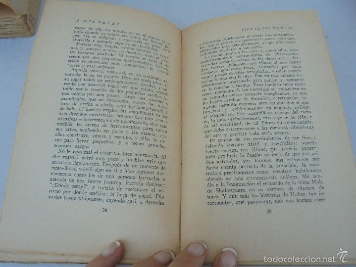 Libros antiguos: COLECCION DE LIBROS SOBRE INSECTOS. TODOS FOTOGRAFIADOS. 3 LIBROS SOBRE ABEJAS. 13 LIBROS EN TOTAL. - Foto 84 - 57691855