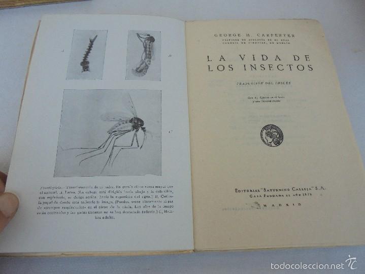 Libros antiguos: COLECCION DE LIBROS SOBRE INSECTOS. TODOS FOTOGRAFIADOS. 3 LIBROS SOBRE ABEJAS. 13 LIBROS EN TOTAL. - Foto 91 - 57691855