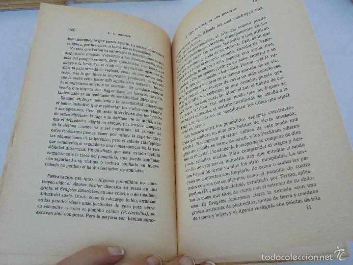 Libros antiguos: COLECCION DE LIBROS SOBRE INSECTOS. TODOS FOTOGRAFIADOS. 3 LIBROS SOBRE ABEJAS. 13 LIBROS EN TOTAL. - Foto 99 - 57691855