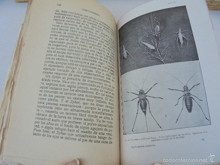 Libros antiguos: COLECCION DE LIBROS SOBRE INSECTOS. TODOS FOTOGRAFIADOS. 3 LIBROS SOBRE ABEJAS. 13 LIBROS EN TOTAL. - Foto 108 - 57691855