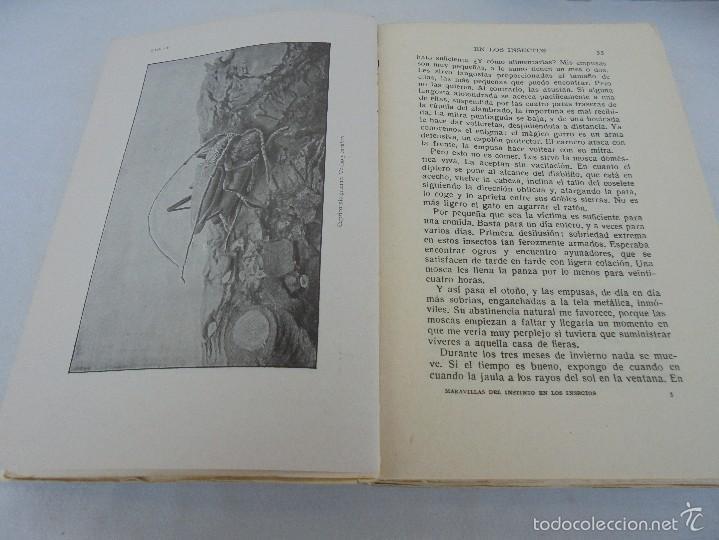 Libros antiguos: COLECCION DE LIBROS SOBRE INSECTOS. TODOS FOTOGRAFIADOS. 3 LIBROS SOBRE ABEJAS. 13 LIBROS EN TOTAL. - Foto 115 - 57691855