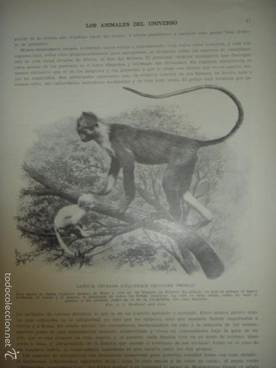 Libros antiguos: LOS ANIMALES DEL UNIVERSO (SU VIDA Y SUS COSTUMBRES) - J.B. DE AGUILAR-AMAT - EDIT. SEGUI HACIA 1920 - Foto 4 - 57731520