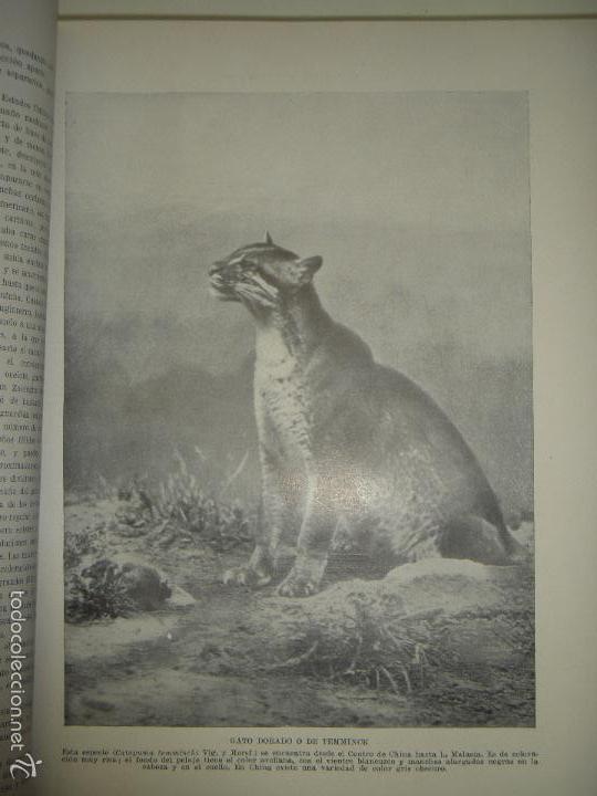 Libros antiguos: LOS ANIMALES DEL UNIVERSO (SU VIDA Y SUS COSTUMBRES) - J.B. DE AGUILAR-AMAT - EDIT. SEGUI HACIA 1920 - Foto 5 - 57731520