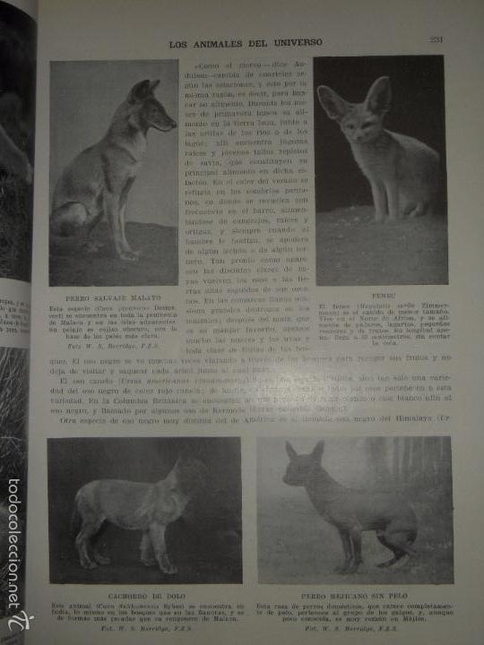 Libros antiguos: LOS ANIMALES DEL UNIVERSO (SU VIDA Y SUS COSTUMBRES) - J.B. DE AGUILAR-AMAT - EDIT. SEGUI HACIA 1920 - Foto 6 - 57731520