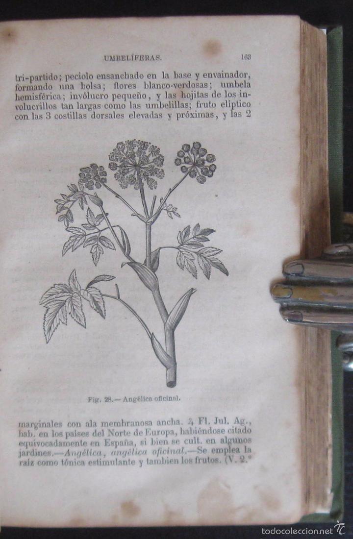 A Puerta Cerrada Comic Porno Todocoleccion 1876 - raro - botánica - 146 grabados - libro i - vendido en