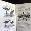 Libros antiguos: BREVANS : LA MIGRATION DES OISEAUX (1878) (MIGRACIONES DE PÁJAROS. 89 GRABADOS XILOGRÁFICOS. MAPA. Lote 59686851