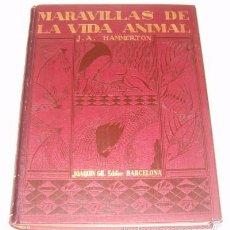 Libros antiguos: J. A. HAMMERTON (DIR.). MARAVILLAS DE LA VIDA ANIMAL. TOMO IV. RM76173. . Lote 59946491