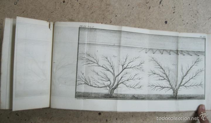 Libros antiguos: La practique du Jardinage.1774.Roger Schabol. Con diez grabados - Foto 8 - 60682227