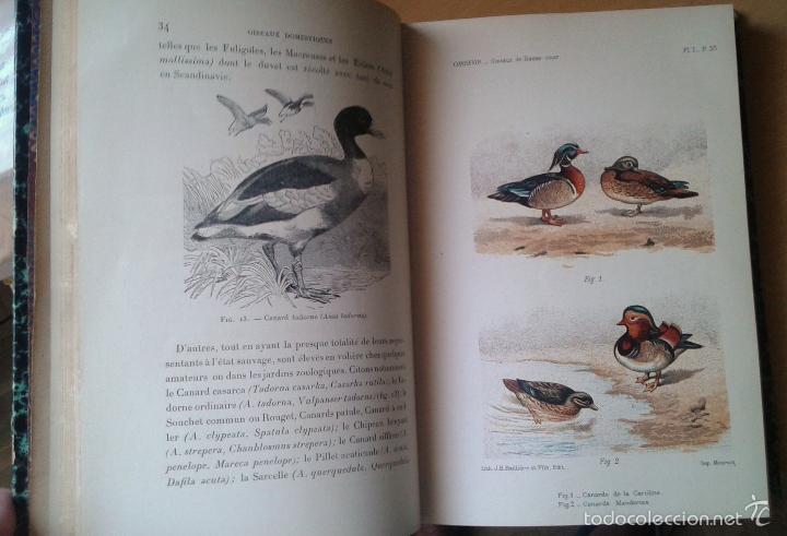 Libros antiguos: Traité de Zootechnie Spéciale- Ch. Cornevin - París 1895 - Foto 3 - 61272895