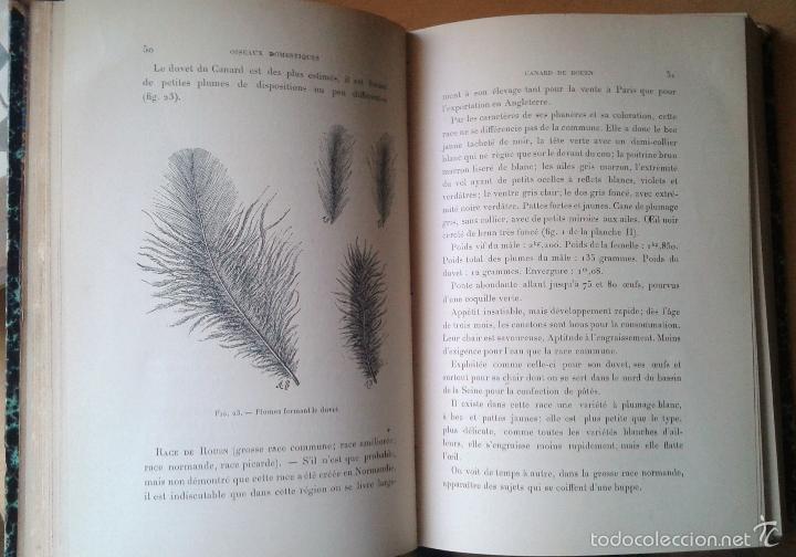 Libros antiguos: Traité de Zootechnie Spéciale- Ch. Cornevin - París 1895 - Foto 5 - 61272895
