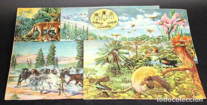 8098 - ANIMALES EN LA NATURALEZA. 5 EJEMPLARES(VER DESCRIPCIÓN). EDIC. KOALA. S/F. (Libros Antiguos, Raros y Curiosos - Ciencias, Manuales y Oficios - Bilogía y Botánica)