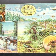 Libros antiguos: 8098 - ANIMALES EN LA NATURALEZA. 5 EJEMPLARES(VER DESCRIPCIÓN). EDIC. KOALA. S/F.. Lote 63549844