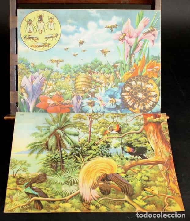 Libros antiguos: 8098 - ANIMALES EN LA NATURALEZA. 5 EJEMPLARES(VER DESCRIPCIÓN). EDIC. KOALA. S/F. - Foto 2 - 63549844
