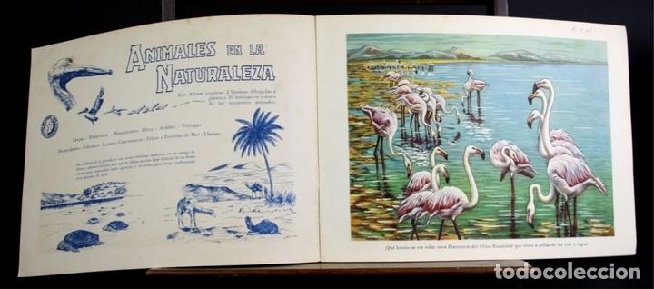 Libros antiguos: 8098 - ANIMALES EN LA NATURALEZA. 5 EJEMPLARES(VER DESCRIPCIÓN). EDIC. KOALA. S/F. - Foto 3 - 63549844