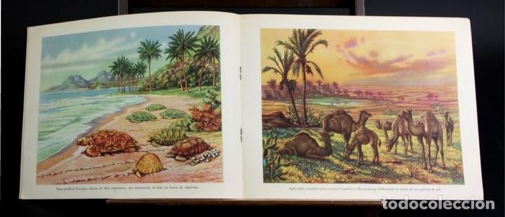 Libros antiguos: 8098 - ANIMALES EN LA NATURALEZA. 5 EJEMPLARES(VER DESCRIPCIÓN). EDIC. KOALA. S/F. - Foto 4 - 63549844