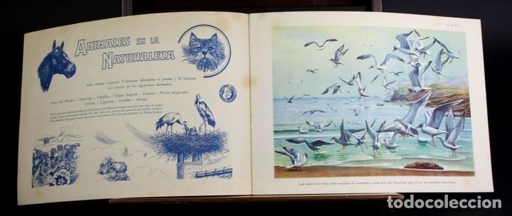 Libros antiguos: 8098 - ANIMALES EN LA NATURALEZA. 5 EJEMPLARES(VER DESCRIPCIÓN). EDIC. KOALA. S/F. - Foto 5 - 63549844