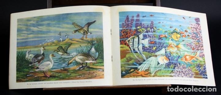 Libros antiguos: 8098 - ANIMALES EN LA NATURALEZA. 5 EJEMPLARES(VER DESCRIPCIÓN). EDIC. KOALA. S/F. - Foto 6 - 63549844