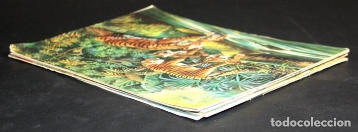 Libros antiguos: 8098 - ANIMALES EN LA NATURALEZA. 5 EJEMPLARES(VER DESCRIPCIÓN). EDIC. KOALA. S/F. - Foto 7 - 63549844