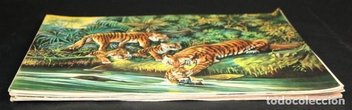 Libros antiguos: 8098 - ANIMALES EN LA NATURALEZA. 5 EJEMPLARES(VER DESCRIPCIÓN). EDIC. KOALA. S/F. - Foto 8 - 63549844