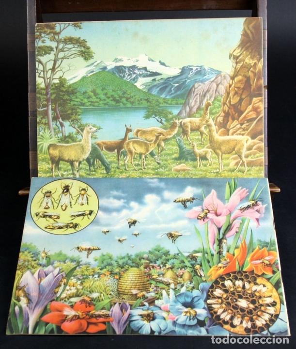 Libros antiguos: 8098 - ANIMALES EN LA NATURALEZA. 5 EJEMPLARES(VER DESCRIPCIÓN). EDIC. KOALA. S/F. - Foto 9 - 63549844