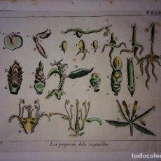 Libros antiguos: GRABADO LIBRO CIENCIAS NATURALES DEL S XVII-XVIII. Lote 67724061