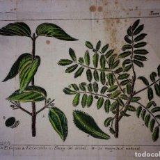 Libros antiguos: GRABADO LIBRO CIENCIAS NATURALES DEL S XVII-XVIII. Lote 67724413