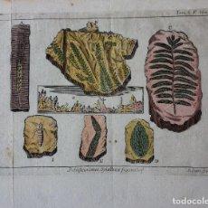 Libros antiguos: GRABADO LIBRO CIENCIAS NATURALES DEL S XVII-XVIII. Lote 67724721