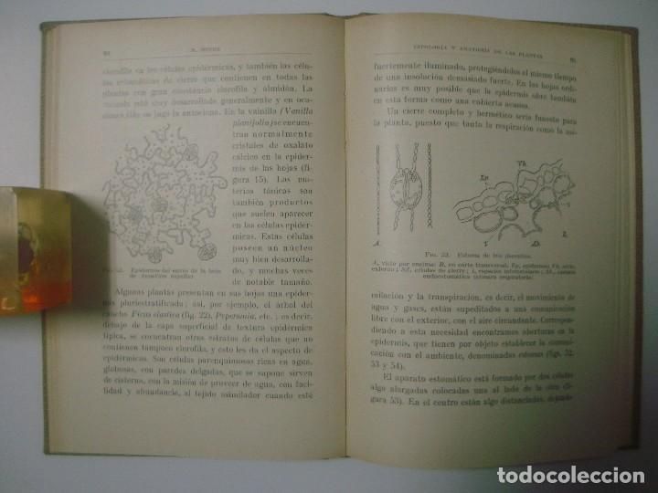 Libros antiguos: PROF.DR.HUGO MIEHE. CITOLOGIA Y ANATOMÍA DE LAS PLANTAS. COLECCIÓN LABOR. 1928 - Foto 2 - 67729049
